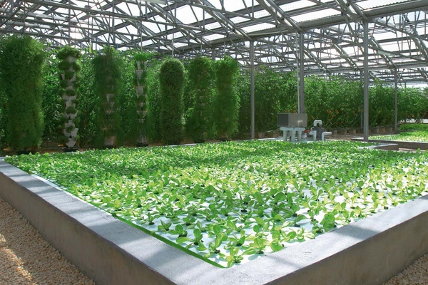 Tips For Designing Energy Efficient Aquaponics Greenhouse