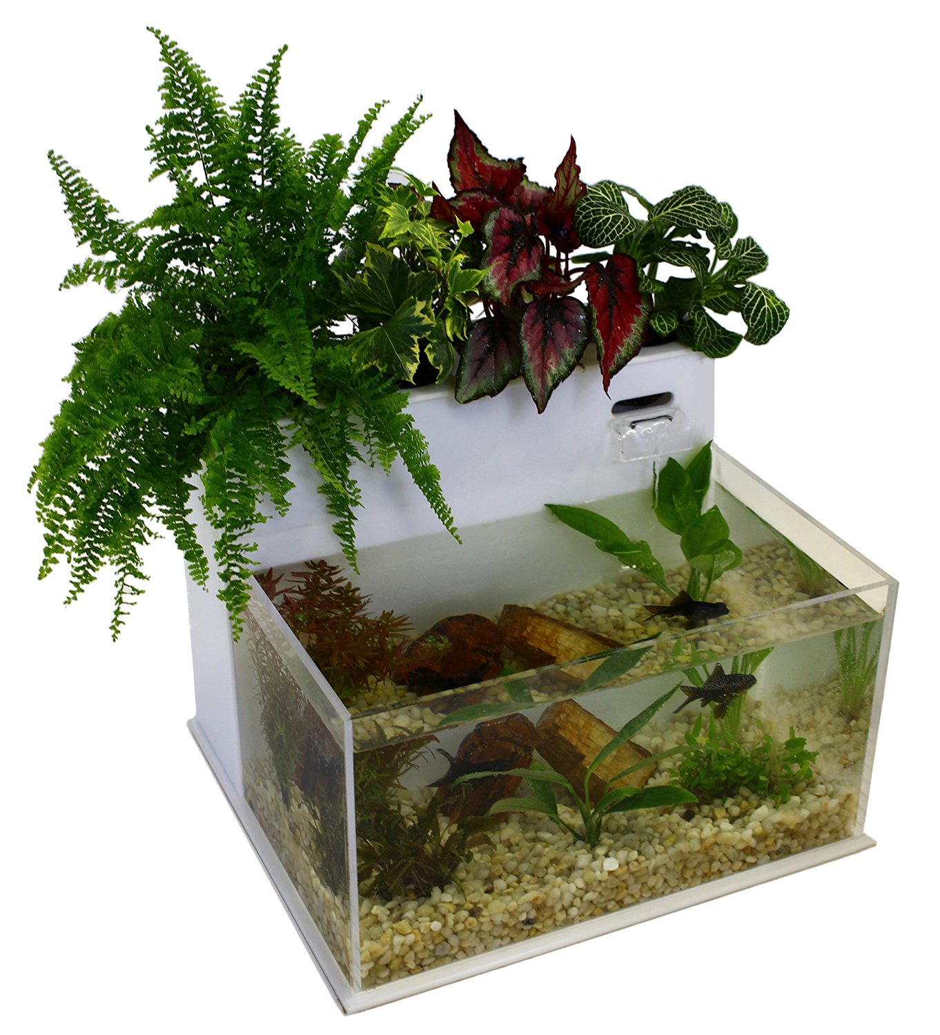 Top 3 best aquaponics kit for you aquaponics definition for Fish tank herb garden